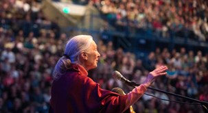 Jane Goodall photo 2