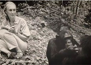<p>Jane Goodall, New Technology, and the Conservation Revolution </p>