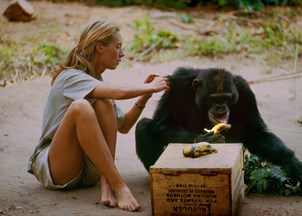 <p>Jane Goodall makes headlines as the subject of new documentary</p>