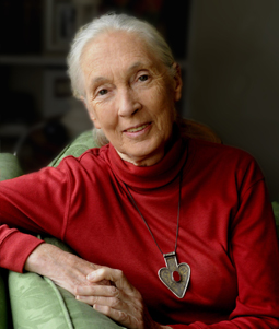 Jane Goodall Keynote Speaker