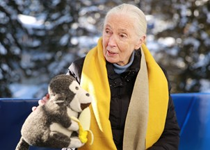 <p>Jane Goodall in-demand at Davos 2020</p>